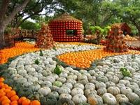 Lễ hội ma quỷ, đến thăm ngôi làng làm từ gần 100.000 quả bí ngô ở Mỹ