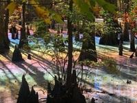 Đầm lầy kỳ lạ mang màu của 7 sắc cầu vồng