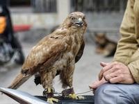 Khám phá chợ chim độc đáo, lớn nhất Hà Nội ngày cuối năm