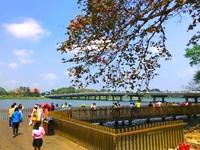 Cầu gỗ lim Huế nhộn nhịp đón người dân du Xuân những ngày đầu năm
