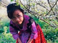 Mê mẩn những cánh đồng hoa đẹp như thiên đường ở Mộc Châu