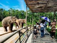 """Vinpearl Safari Phú Quốc – Trải nghiệm """"Tết mới"""",  gắn kết thiên nhiên"""