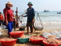 Khám phá những chợ cá ven biển Quảng Nam