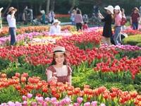 """Một triệu bông tulip & """"giấc mơ có thực"""" tại Sun World Ba Na Hills"""