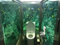 Đi vệ sinh giữa thủy cung với đàn cá nhiều màu bơi lội xung quanh
