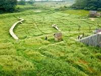 """Mãn nhãn vườn hoa tam giác mạch gần 1 héc ta ở Hà Nội """"hút"""" khách tham quan"""
