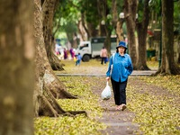 Ngẩn ngơ trước vẻ đẹp của phố phường Hà Nội mùa lá rụng
