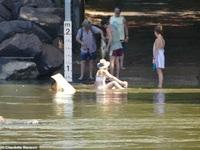 """""""Gái xinh"""" liều lĩnh ngồi thả dáng dưới khúc sông đầy cá sấu"""