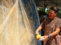 Quảng Nam: Khôi phục con đường thuyền thúng nghệ thuật