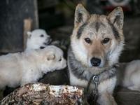 Chợ thịt chó nổi tiếng chính thức đóng cửa