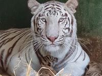 Sở thú Vườn Xoài – Đồng Nai liên tục đón nhận tin vui từ nhiều thú con mới sinh