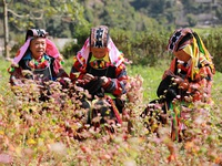 Có gì đặc biệt ở Lễ hội hoa tam giác mạch 2019 ở Hà Giang?