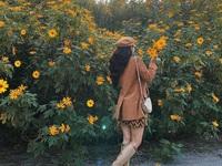 Đẹp mê hồn thiên đường ngắm dã quỳ ngay gần Hà Nội tháng 11