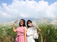 Giới trẻ nô nức check-in cánh đồng cỏ lau gần phố cổ Hội An