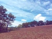 Tháng 11 về, lạc vào cánh đồng cỏ hồng đẹp như xứ sở thần tiên ở Đà Lạt