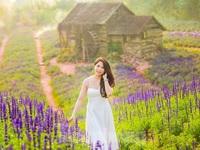 Cánh đồng hoa Nữ hoàng xanh như trời Âu giữa Hà Nội
