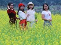 Vườn hoa cải rực vàng đẹp mê hồn khiến du khách nao lòng ở Thung Nham