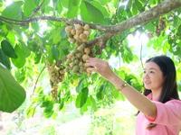 Khuyến khích khởi nghiệp từ du lịch ở làng cổ Lộc Yên