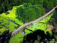 Mê mẫn cây cầu tre xuyên rừng tràm đẹp nhất Việt Nam