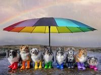 """Nhờ 7 chú chó """"thần tài"""", một hòn đảo hẻo lánh bỗng có tên trên bản đồ du lịch"""