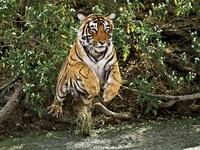 Đất nước nào có nhiều hổ nhất?