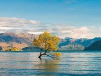 Biểu tượng hy vọng của New Zealand bị phá hoại