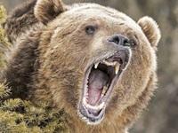 Gấu bị kết án tử hình vì tấn công hai cha con