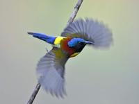 Leo núi chụp ảnh, ngắm chim rừng Sa Pa