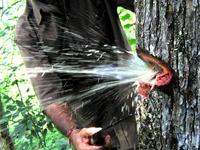 Nước từ thân cây bắn ra xối xả như mở vòi phun