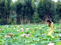 Vườn Quốc gia Tràm Chim thu hút khách du lịch dịp tết dương lịch