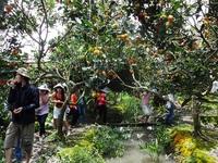 Về miệt vườn Vĩnh Long thưởng thức những trái ngon nức tiếng