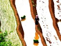 Mù Cang Chải quyến rũ trong mùa nước đổ