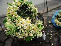 Những sắc hoa tháng 3 dịu dàng giữa trời Hà Nội