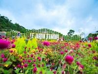 """Ngắm vườn hoa mùa đông trên """"sân thượng"""" Đà Nẵng"""