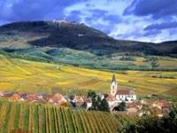 """Khám phá """"con đường rượu vang"""" đầu tiên nước Pháp"""