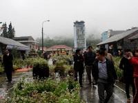 Lễ hội hoa tam giác mạch vẫn diễn ra dù Hà Giang mưa lớn