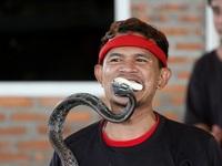 """Rùng mình xem người Thái """"giỡn mặt"""" với rắn độc ở Nha Trang…"""