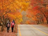 Du lịch nước chủ nhà Asiad 17 mùa lá đỏ