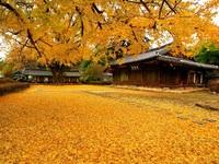 Thiên đường mùa thu ở xứ Hàn