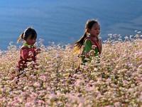 Quyến rũ Hà Giang mùa hoa tam giác mạch