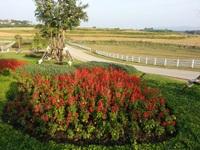 Chiều rực rỡ trong công viên rộng lớn Shingha Chiang Rai