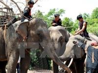 Bản Đôn - Địa danh du lịch nổi tiếng nhất của tỉnh Đắk Lắk