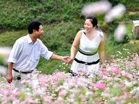 Lên vùng cao Lào Cai ngắm hoa Tam giác mạch nở trái mùa tuyệt đẹp