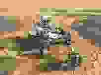 """NASA tìm thấy bằng chứng về trận """"siêu lụt"""" trên Sao Hỏa cách đây 4 tỷ năm"""