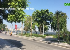 Hà Nội: Diện mạo mới của phố Trích Sài sau khi 96 cây hoa sữa được đánh chuyển