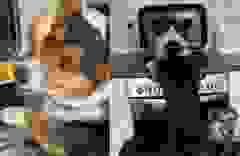 """Ba chú chó phối hợp ăn ý để """"đánh chén"""" đồ ăn"""