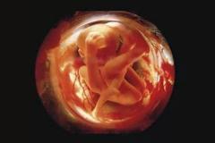Những bức ảnh đáng kinh ngạc về sự phát triển của thai nhi trong bụng mẹ