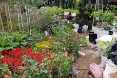 Trồng hơn 8.000 chậu hoa, đôi vợ chồng trẻ kỳ vọng kiếm trăm triệu đồng dịp Tết