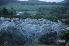 Đồi cam 6 tỷ đồng kỳ lạ nhất Việt Nam, 2.000 cây mắc màn trắng cả rừng
