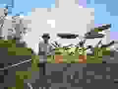 """Câu con """"lộc trời cho"""" nông dân Hải Dương kiếm nửa triệu một ngày"""